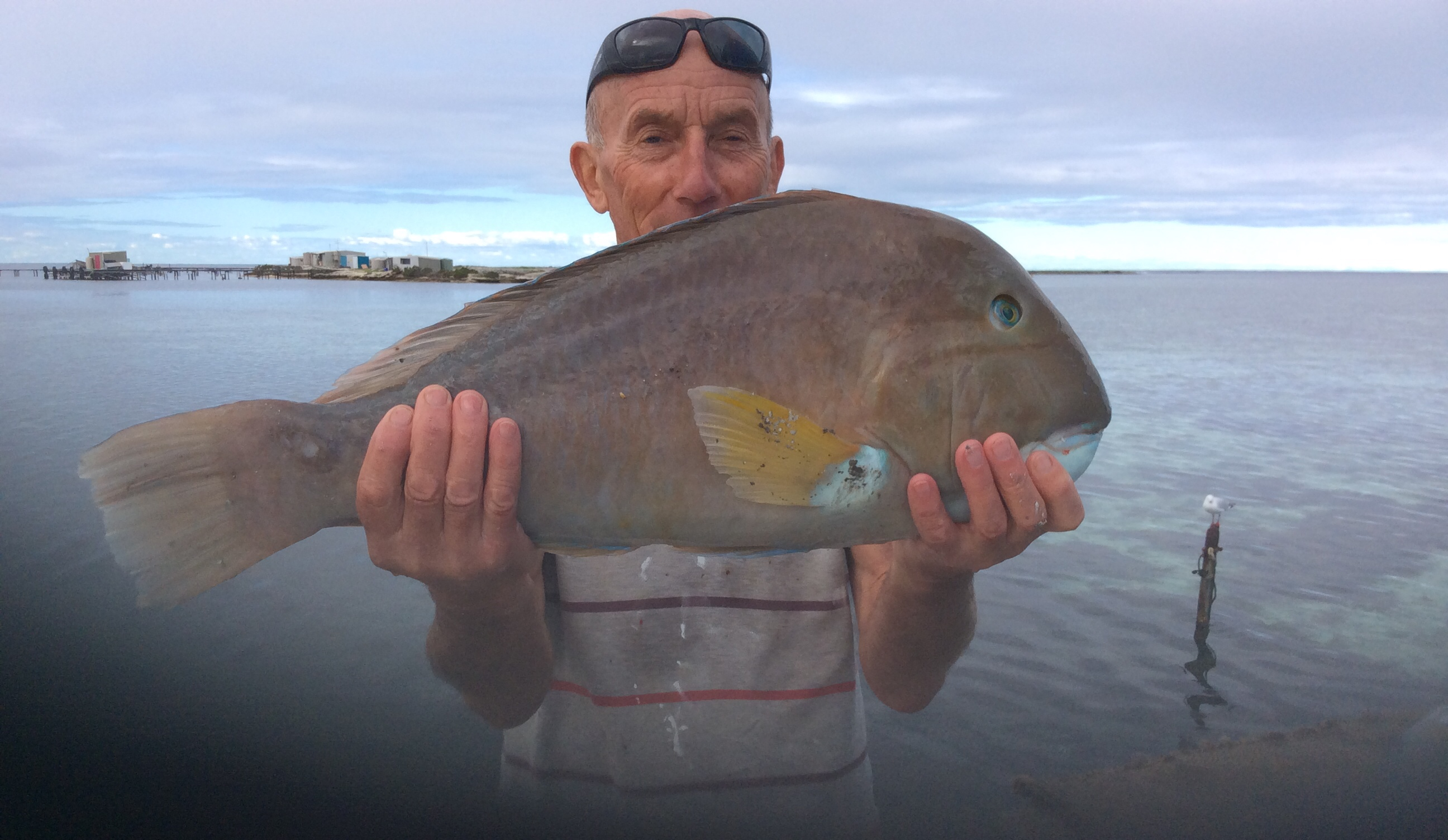 5 plus kilos Baldchin Groper from the Abrohlos Islands
