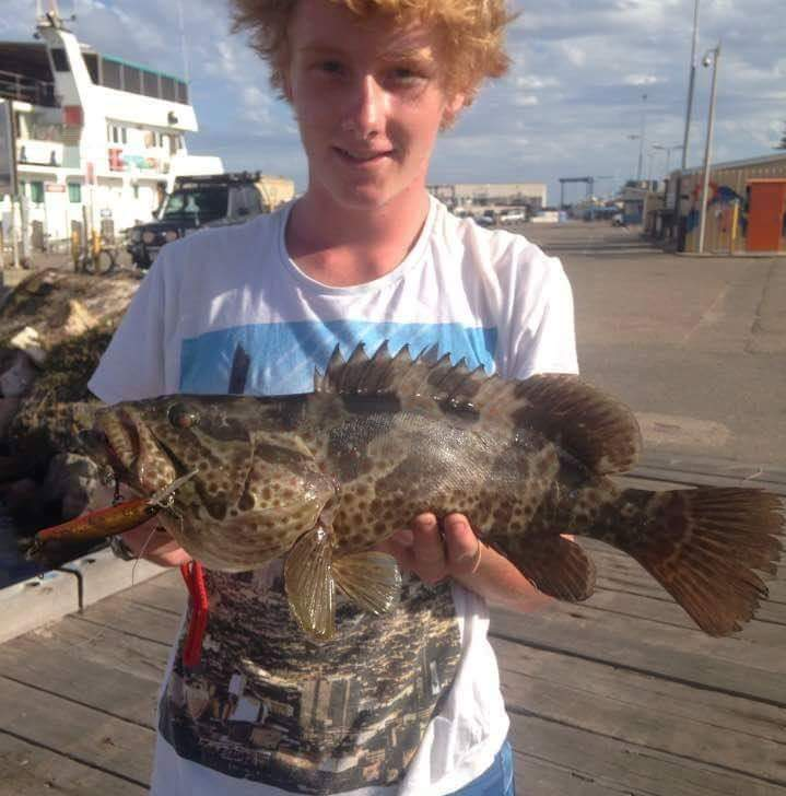 Estuary Cod on live bait and lures